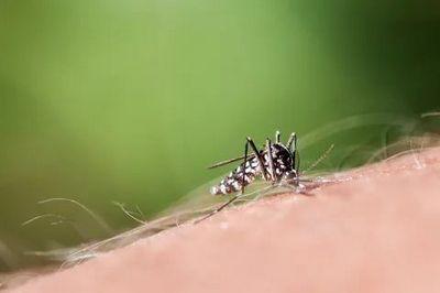 Обработка участка от комаров Котельники