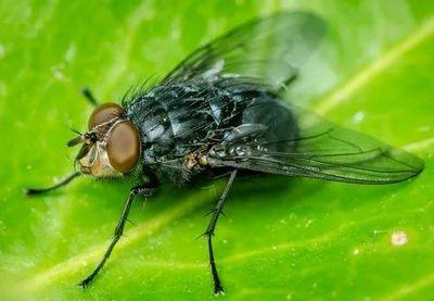 Уничтожение и обработка от мух Котельники