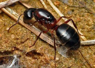 Уничтожение муравьев Котельники